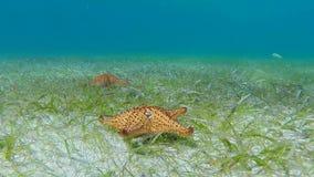 Movimiento de las estrellas de mar a través del fondo marino almacen de metraje de vídeo
