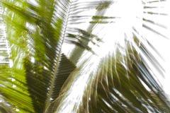 Movimiento de las hojas Fotos de archivo