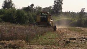 Movimiento de piernas de la cosechadora de la granja en campo de grano del pueblo Tiempo de cosecha metrajes
