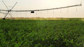 Movimiento de riego de la irrigación de la granja almacen de video
