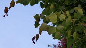 Movimiento de soplar las hojas verdes metrajes