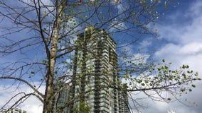 Movimiento del alto edificio de la subida y de la hoja del árbol que sopla almacen de metraje de vídeo