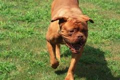 Movimiento del perro Imagenes de archivo