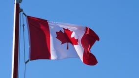 Movimiento del vuelo canadiense de la bandera en astas de bandera almacen de video