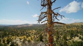 Movimiento dinámico de la cámara en parque del barranco del bryce del canto del valle del desierto almacen de video