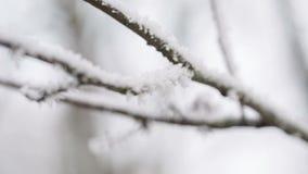 Movimiento helado de la cacerola del branche del árbol almacen de video