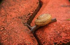 Movimiento lento del caracol en ladrillo Fotografía de archivo libre de regalías