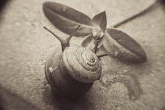 Movimiento lento del caracol en ladrillo imagen de archivo