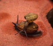 Movimiento lento del caracol en ladrillo foto de archivo