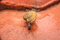 Movimiento lento del caracol en ladrillo Imagen de archivo libre de regalías