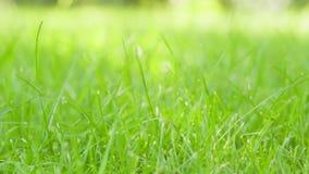 Movimiento lento del carro del campo de hierba verde almacen de video