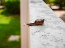 Movimiento lento del pequeño caracol del foco Imagen de archivo