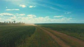 Movimiento a lo largo del campo de trigo, oídos verdes en el viento, natural, naturaleza, orgánica metrajes