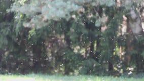 Movimiento y vuelo abstractos de muchos insectos en un fondo verde del bosque almacen de video
