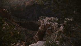 Movimientos de la cámara detrás de árboles de revelar la opinión épica del paisaje de la puesta del sol de la reserva majestuosa  metrajes