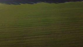 Movimientos de la cámara a lo largo de un campo verde rayado de la agricultura Imágenes de vídeo Visión aérea desde arriba metrajes