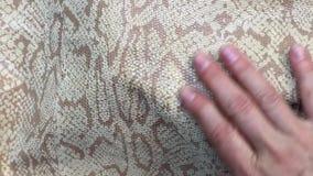 Movimientos femeninos de la mano un pit?n hermoso de la piel, animaci?n natural abstracta lujosa, almacen de metraje de vídeo