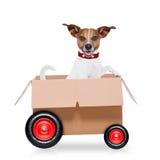 Moving собака коробки Стоковое Изображение