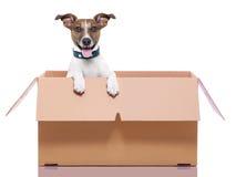 Moving собака коробки Стоковые Изображения