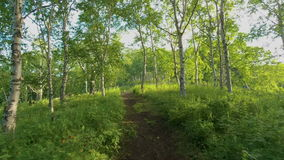 Moving along forest path stock video footage