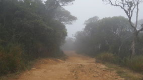 Moving along mountain path among tropical forest. Point of view walk through rainforest path. First person view of going. Through jungle road at foggy wet stock footage