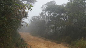Moving along mountain path among tropical forest. Point of view walk through rainforest path. First person view of going. Through jungle road at foggy wet stock video