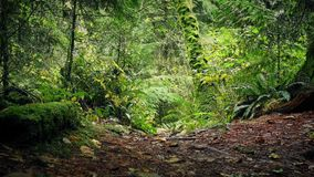 Moving Along Rugged Path Through The Forest. Slowly moving forward on woodland trail in dense forest stock video