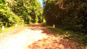 Moving along Shadow Sunny Dirt Road after Rain in Tropic Forest stock video footage