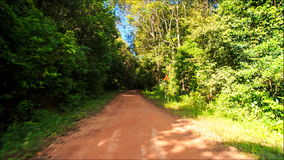 Moving along Shadow Sunny Dirt Road after Rain in Tropic Forest stock video