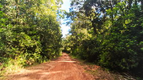 Moving along Shadow Sunny Ground Road in Tropic Forest stock video footage