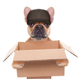 Moving box dog Royalty Free Stock Images