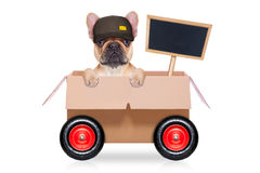 Moving box dog. Mail  delivery  french bulldog dog in a big moving box on wheels  with blank placard or blackboard, isolated on white background Stock Image