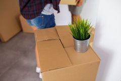 Moving box with a plant on it. Time to unpack. Close up. Stock Images