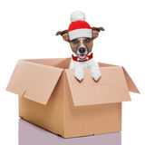 Moving box winter dog Royalty Free Stock Image