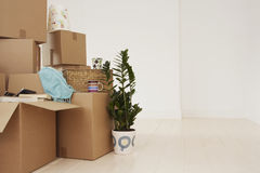 Moving Boxes In New House. Stack of moving boxes and pot plant in new house Royalty Free Stock Photography