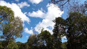Moving clouds. Colorful sky with moving clouds in forest stock video footage
