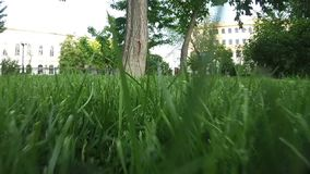 Moving through cutted grass in park stock footage