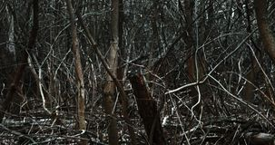 Moving through dark forest stock footage