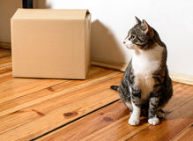 Moving day - cat and cardboard boxes in room. Moving day - cat and cardboard boxes on floor in room Royalty Free Stock Photo
