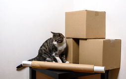 Moving day - cat and cardboard boxes in room. Moving day - cat and cardboard boxes with table in room Royalty Free Stock Images