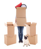 Moving day concept - woman holding brown cardboard boxes and dog. Isolated on white background Royalty Free Stock Photography