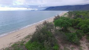 A moving drone shot above a dry tree. An aerial drone shot close to a dried tree. Green trees are seen on the background facing a beautiful blue water beach stock video footage