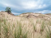 Moving dune formations - Slowinski National Park, Poland. Dune formations covered with grass and pine trees, moving dune Wydma Czolpinska in the Slowinski Royalty Free Stock Image