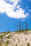 Moving dunes at the Baltic Sea Stock Photo