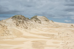 A moving dunes Stock Images