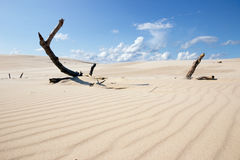 Moving Dunes Poland Stock Image