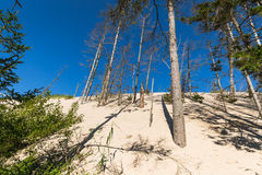 The moving dunes in the Slowinski National Park, Poland. The dun Royalty Free Stock Photography