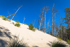 The moving dunes in the Slowinski National Park, Poland. The dun Royalty Free Stock Photos