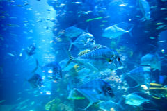 Moving fish in underwater aquarium Royalty Free Stock Photos