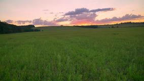 Moving footage with different angles of beautiful sunset above wheat or rye field, pink sky with clouds stock video